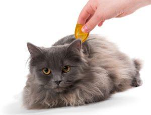 loppemiddel til kat