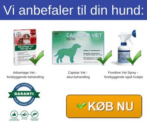 Loppemidler til hunde